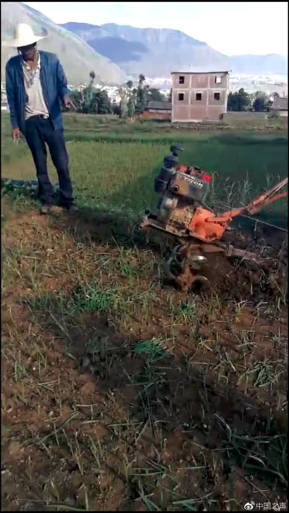为防洱海污染大理铲拔大蒜 农户